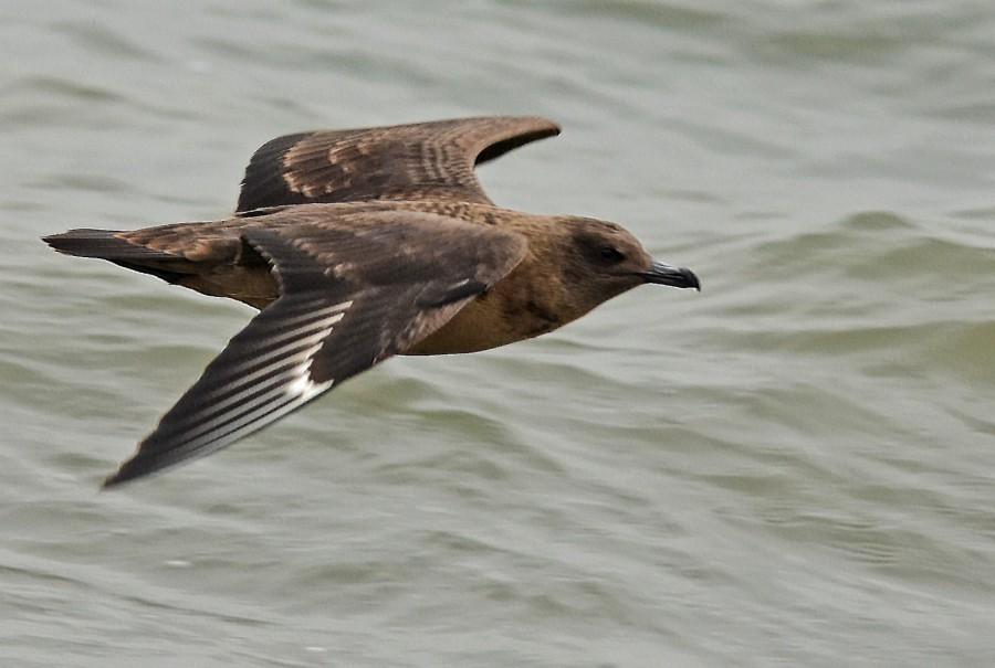 Wangerland Birding Besonderheiten